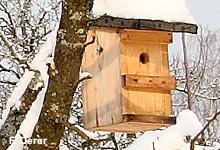 Nistkästen helfen vielen Vögeln auch im Winter