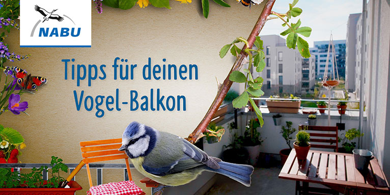 Video-Tipp Vogelbalkon